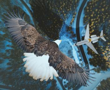 Keine Flugverspätungsentschädigung bei Vogelschlag